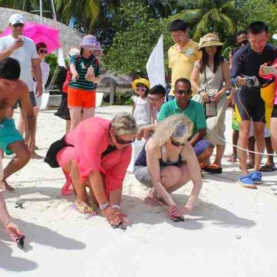 Guest sitting in the beach while holding baby turtles to be released with a crowed background at Sun Aqua Vilu Reef