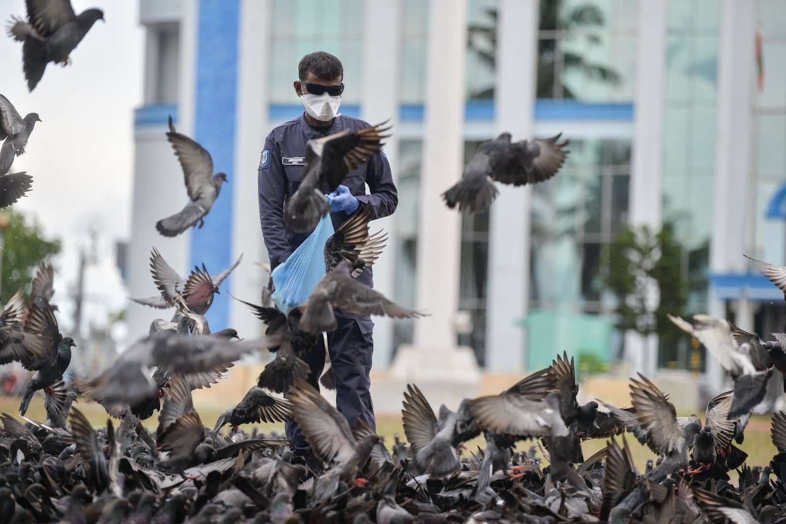Maldives Police Services individual feeding the pigeons due to the situation in maldives.