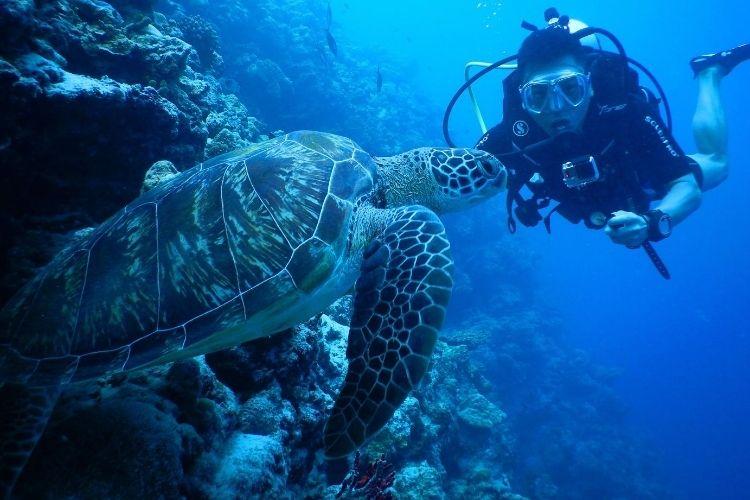 underwater world at seaside finolhu