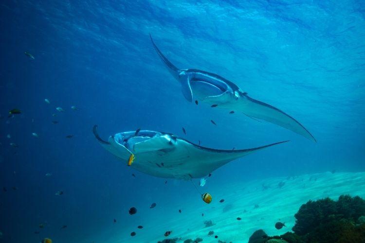 Dusit Thani Maldives marine life