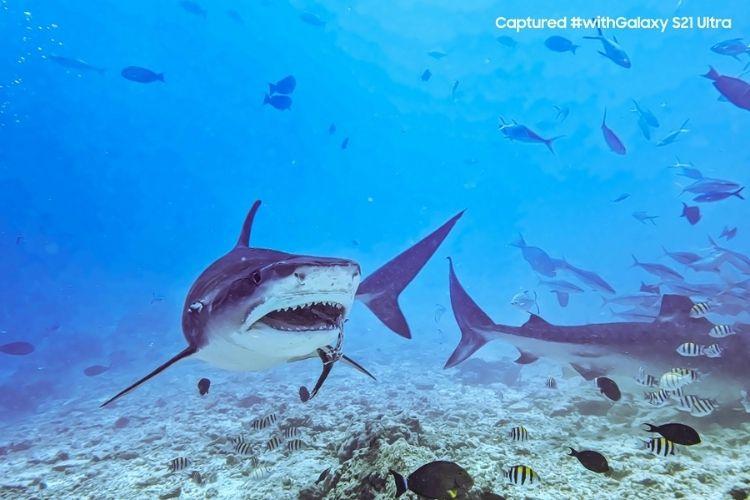 S21 Ultra Tiger Sharks